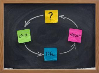 Reincarnation cycle of lifetimes