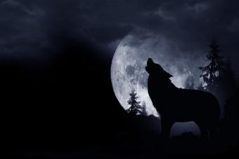 Observing the Dream Wolf