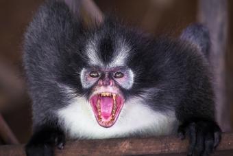 https://cf.ltkcdn.net/paranormal/images/slide/238227-850x567-zombie-monkey.jpg