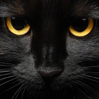 https://cf.ltkcdn.net/paranormal/images/slide/240130-850x850-8-black-cat.jpg