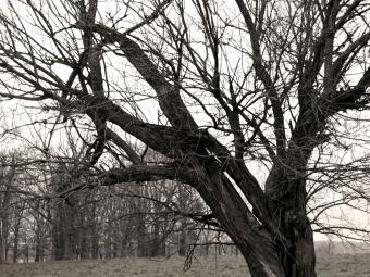 https://cf.ltkcdn.net/paranormal/images/slide/240340-850x638-spooky_looking_tree.jpg