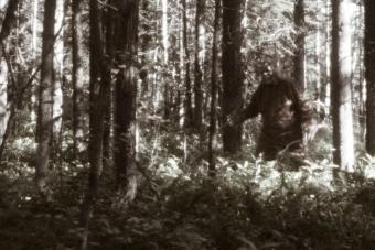 6 Sasquatch Videos: Are They a Hoax or Something More?