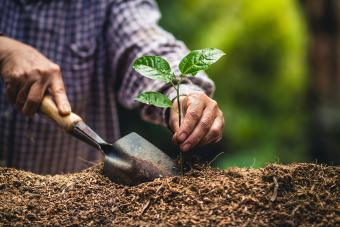 Man planting plant in a garden