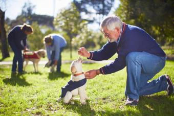 Man working with guide dog at training