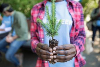 Tree planting volunteer holding tree sapling