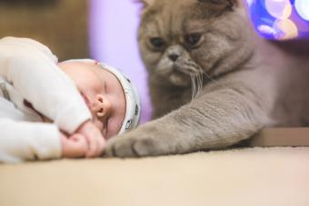 Cat with a sleeping baby
