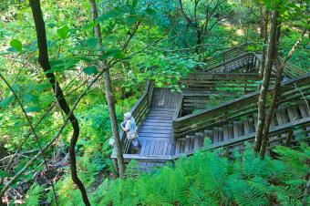 Stairs to sinkhole at Devil's Millhopper