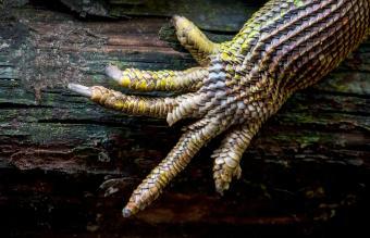 hand of a lizard