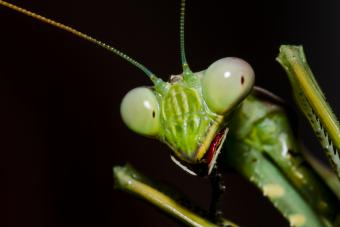 Common Insectoid Aliens Traits & Troubling Encounters