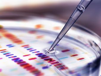 DNA and petri dish