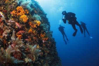 Scuba divers under water
