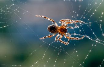 Spider Spiritual Meanings: Impacts on Your Path Explained
