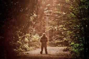 Sasquatch in the forest