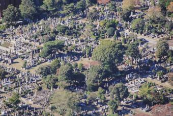 Aoyama Cemetery, Tokyo, Japan