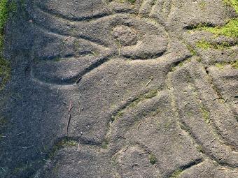Petroglyphs in Nanaimo BC