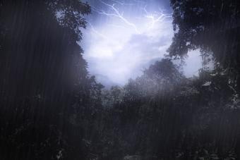 thunderstorm over woods