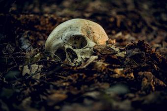 Human skull in dry autumn leaves