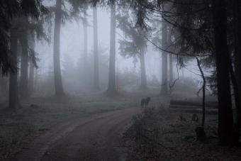 Dog in the foggy forest
