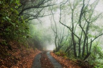 7 Haunted Hikes in Washington and Their Chilling Backstories