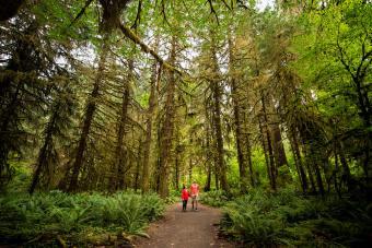 Hoh Rainforest, Olympic National Park. Washington