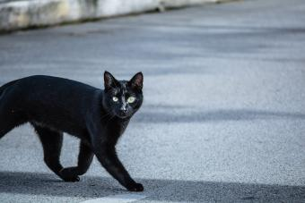 Black Cat On Road