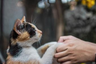 Human Hands Holding Cat Paw