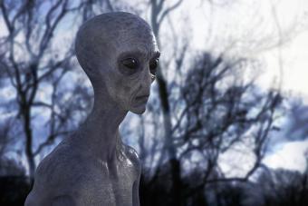 https://cf.ltkcdn.net/paranormal/images/slide/277155-850x567-grey-alien-in-the-forest.jpg
