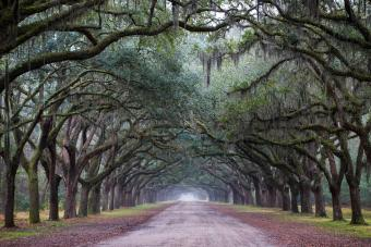 15 Best Savannah Ghost Tours for Paranormal Enthusiasts