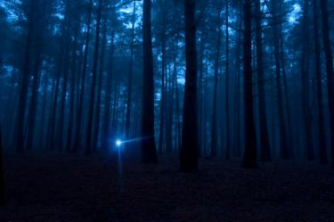 A lone flashlight shining in the dark woods
