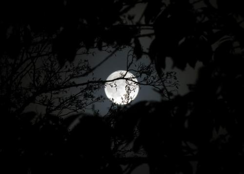 Full moon behind branches