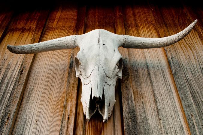 Longhorn skull on wood wall