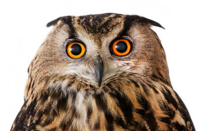 Meaning Of An Owl As Your Spirit Animal Lovetoknow