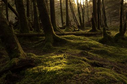Mossy dark forest