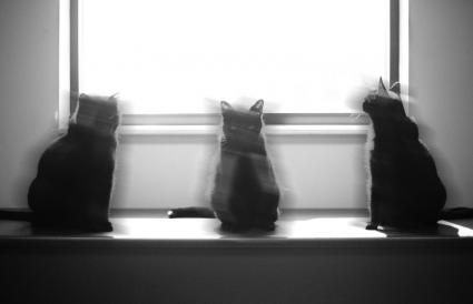 Three black cats on a table in front of a window