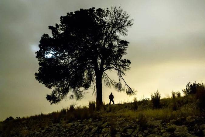 lone figure under tree at dusk