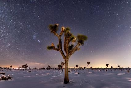 Night sky above joshua trees