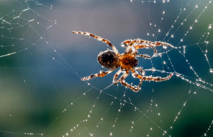 Spider in its silky web
