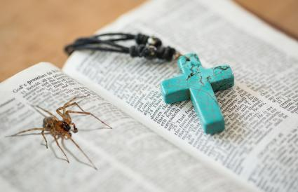 Bible with spider inside