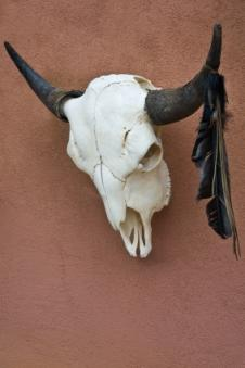 Native American skull and feather