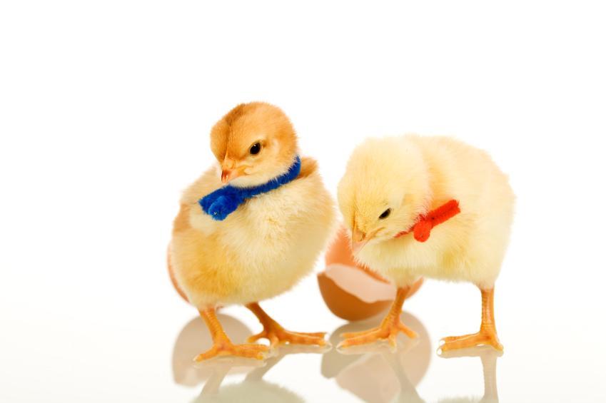 https://cf.ltkcdn.net/party/images/slide/130895-849x565r1-EasterChicks.jpg