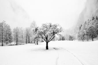 Winter Solstice Decoration Ideas