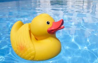 Rubber duck in pool