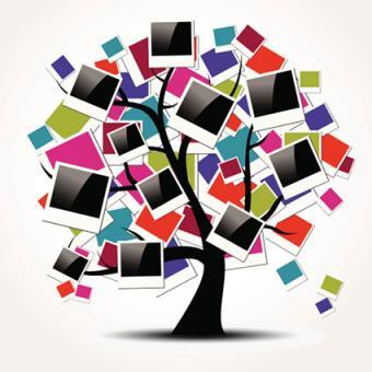 photo tree concept