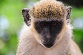 Where Can I Rent a Monkey for a Birthday Party