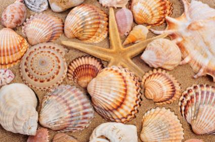Starfish, shells and sand