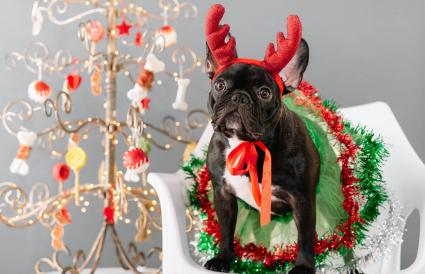 dog dressed in Christmas costume