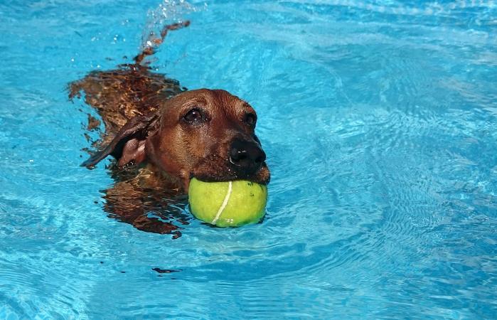 Perro nadando en la piscina
