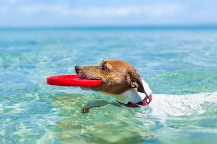 Perro nadando en el mar