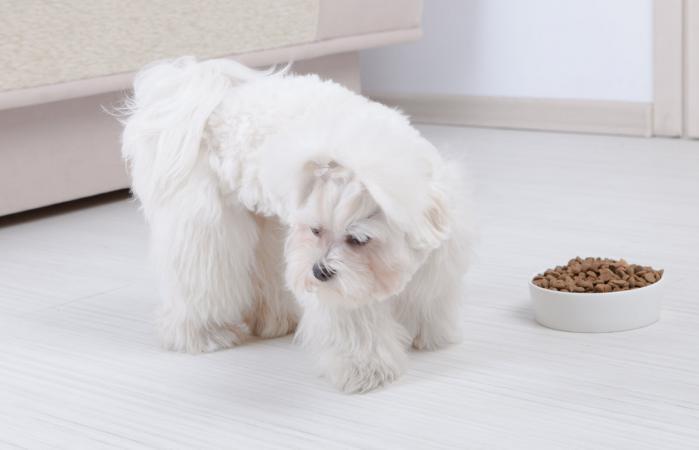 Perro se niega a comer alimentos