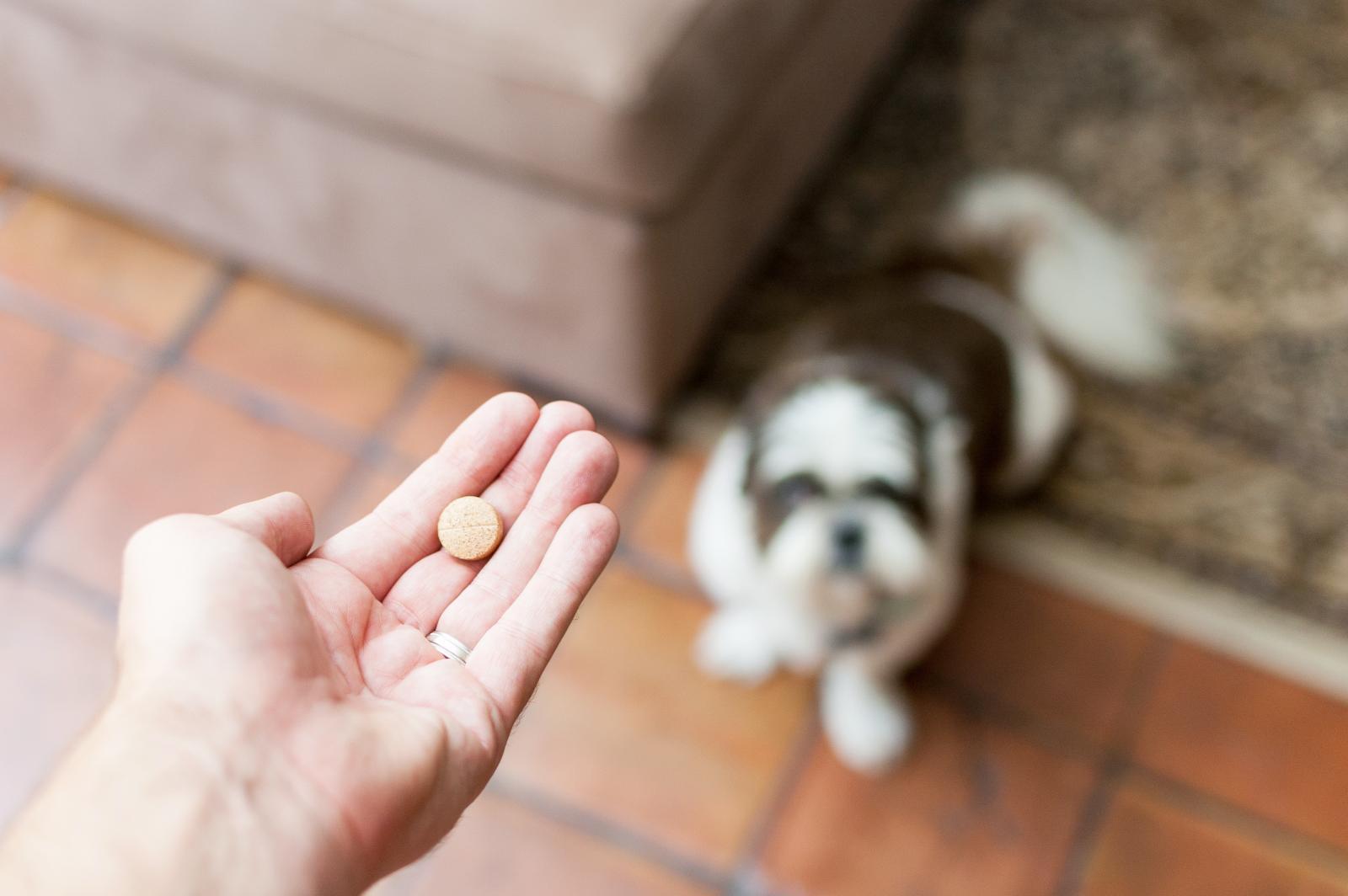 Aspirina en perros